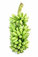 Hardy Banana Plant 'Ice Cream' Tasty Fruit Tree Blue Java Live Plant 3-Inch Pot