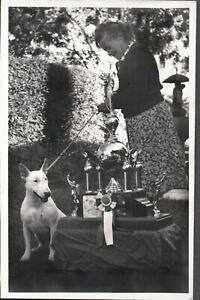 VINTAGE PHOTOGRAPH ALFRED JACOBS BULL TERRIER DOG SAN FRANCISCO CALIFORNIA PHOTO