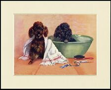 POODLE DOGS AT BATH TIME CHARMING DOG PRINT MOUNTED READY TO FRAME