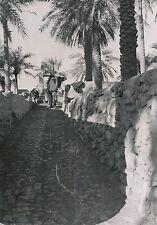 BERRIANE  c. 1935 -Âne, Chameau tirant les Outres Hors du Puit Algérie- DIV 6516