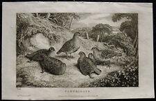 Reclamos/perdices – ORIG. grabado de Howitt, 1822 (fechado)