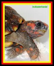 :Inkubator/Brutkasten/Brutmaschine/Brutapparat/Incubator/Incubadora/Schildkröten