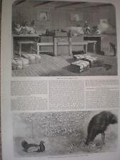 David Wilson Co coton presse en action de l'Inde 1864 OLD PRINT et l'article