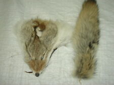 #1 Quality XL Tanned Western Coyote Tail and Face Combo/Fur/Crafts/Real Fur/trap