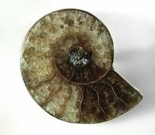 Ammonite Fossil and Sterling Silver Ring Size 8