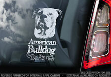 American Bulldog - Car Window Sticker - Dog on Board Decal Sign Gift Art - V05
