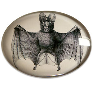 Antique Bat Illustration Horizontal Glass Cameo Cabochon Jewelry Supplies 40x30