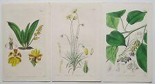 3 ORIGINALI CURTIS BOTANICA Incisioni Stampe Date 1837 & 1838 (c24)
