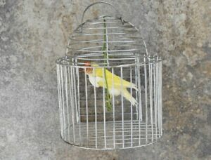 Beauty Domestic Gold Finch in Cage on cradle New Premium Taxidermy Bird