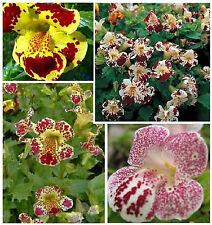 Monkey Flower Seeds - Mix - Garden Seeds - Bulk