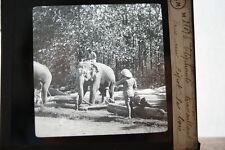 INDE ELEPHANTS TRAVAILLANT DANS UN DEPOT DE BOIS  PHOTO PLAQUE DE VERRE MOLTENI
