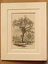 LIBERTY TREE BOSTON COMMON USA ANTIQUE DOUBLE MOUNTED ENGRAVING 1876 PUBLICATION