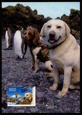 AAT MK PINGUINE PINGUIN PENGUIN HUNDE HUND DOG CARTE MAXIMUM CARD MC CM bq08