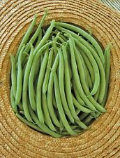 French Filet BEANS GOURMET Qualité sans fil Haricots SUPERBE goût 50 fresh seeds