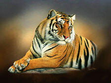 Limited Edition of Tiger Head Study Prints by Robert J. May