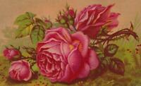 Victorian Trade Card Rainbow Blend Coffee Using Print of Gorgeous Pink Roses