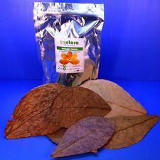 Aquarium 50pcs 18~31cm Catappa Leaves Seemandelbaumblätter A Indian Almond Leaf