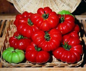 Tomato (Costoluto Fiorentino) Seeds 😊 30+ Seeds Great 4 The BBQ Instructions x