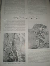 Photo article the Golden Eagle in Scotland 1901 ref Y3