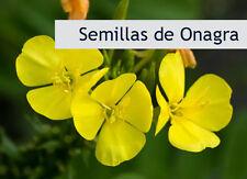 1.000 semillas de ONAGRA Oenothera biennis - ONAGRA.  2 gramos - medicinal
