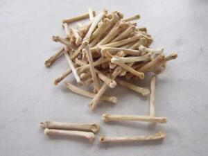 20 Coyote Foot Bones Metatarsals Jewelry Supplies Craft Projects Coyote Bones