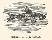 2 pièces Grundel imitation gobio Grundel 7cm 9g caoutchouc poisson swimbait Koppe imitation