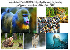 Animal Prints Pictures Wildlife Photo Poster Print ONLY Wall Art A4 - 30 Types