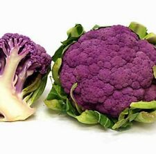 Italian purple headed cauliflower Seeds 100Pcs