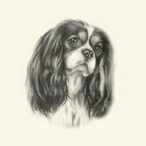 Dog Show Ring Number Clip Pin Breed - Cavalier King Charles Spaniel