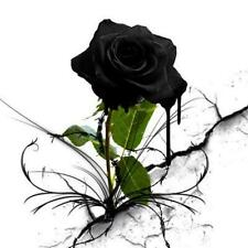 30 piezas de plantas de flor rosa misteriosa Negro Rose hermosa Semillas