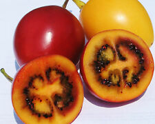Tree Tomato - SOLANUM BETACEUM - 10 Seeds Vegetables/ Fruits