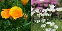 400/4000 Graines PAVOT DE CALIFORNIE Varié Fleurs Soyeuse 5-8cm
