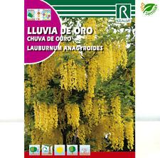 Lluvia de Oro ( Laburnum anagyroides ) 1 gr / 40 semillas apróx - seeds