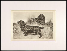 SUSSEX SPANIEL RARE 1894 ANTIQUE DOG PRINT by ARTHUR WARDLE READY MOUNTED