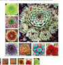 100 Pcs Amazing Sempervivum Plants Mixed Mini Garden Succulents Cactus Seeds