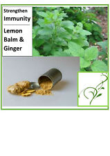 Lemon Balm & Ginger Teabags (4) Strengthen Immunity Natural Organic Herbal TEA