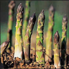 100 PCS Seeds Vegetable And Fruit Asparagus Bonsai Plants Free Shipping NEW 2019
