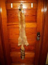 BEAUTIFUL tanned RED FOX fur pelt skin taxidermy F13 man cave ,log cabin collar