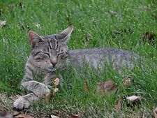 DONATE TO FEED VET RESCUED FERAL CAT KITTEN IN GRASS CAT RESCUE Rec COLOR PHOTO