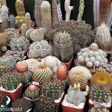 10 cactus seeds mix *Easy grow * Care free *  SF 3984