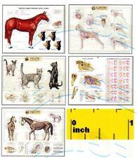 DOLLSHOUSE Mini Vets Veterinary Animal Medical Anatomy Picture SET  - CDHM 1:12