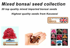 Mix of 20 bonsai seeds high quality imported Kacasesi seeds exotic seeds