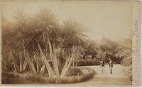 Palmiers Algeria Frith 'S Foto CDV PL52L5n46 Vintage Albumina c1865
