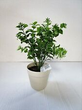 28cm Artificial Potted Fittonia Plant - Houseplant - Office Plastic Plant