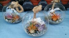 Limited Air Plant In Self Containing Glass