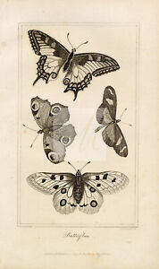 ANTIQUE Natural History Print - Various Butterfly Species 1821  #E978
