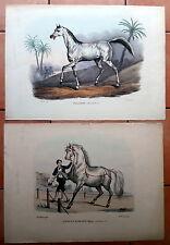 IPPOLOGIA  - CAVALLI - Lotto DI 2 LITOGRAFIE A COLORI - 1870 CIRCA
