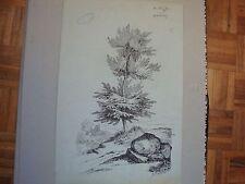 ETUDE D'ARBRE  ENCRE DE CHINE par CH. FROMHEIM 1879