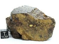 METEORITE NWA 13356 LL4  CHONDRITE METEORITE OFFICIALLY CLASSIFIED & APPROVED