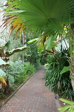 Palm/Fern Covered Walkway, Photo Art Wall Decor Family Room, Den, Kitchen Bath